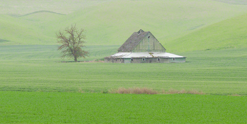 barn-tree-palouse-washington