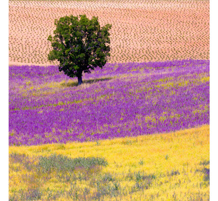 colorful-fields-provence-france