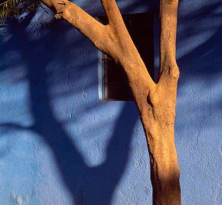 ree-shadow-wall-oaxaca-mexico