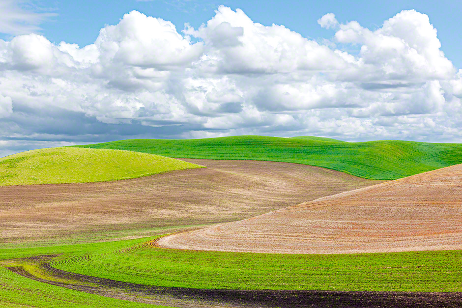 plaouse_spring_fields_washington