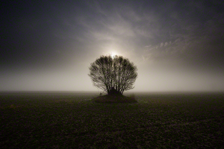 tree-fog-sun-skagit-valley-washington-state