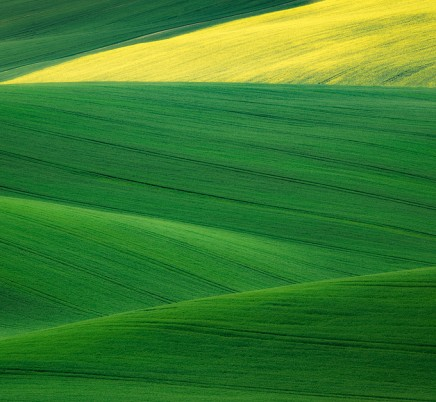 wheat fields moravia czech republic